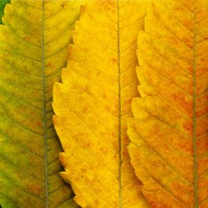 fotografowanie-jesieni-kurs-fotografii-001