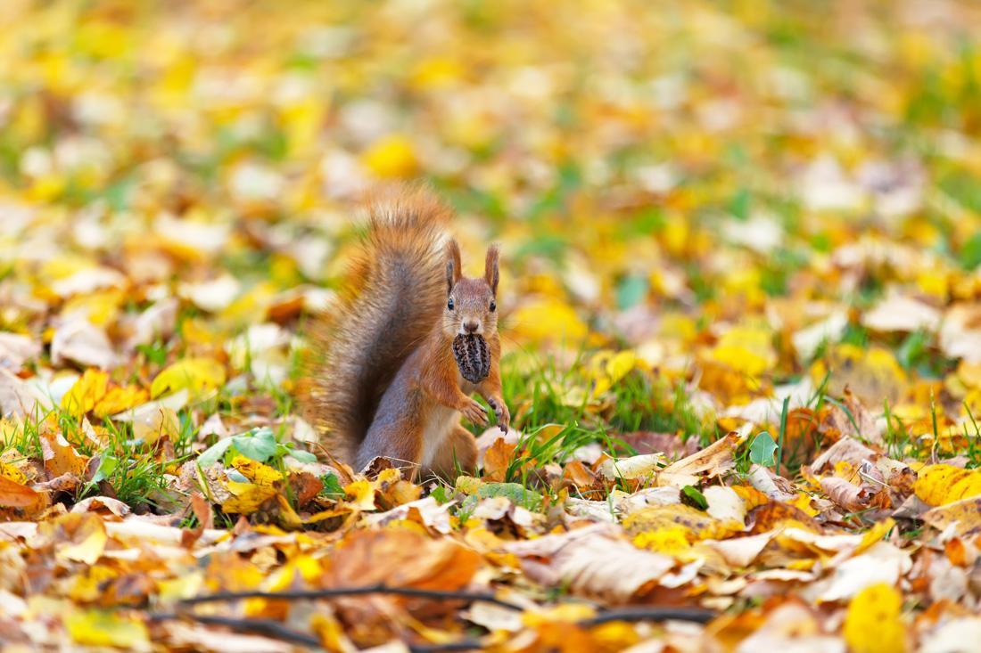 fotografowanie-jesieni-kurs-fotografii-006