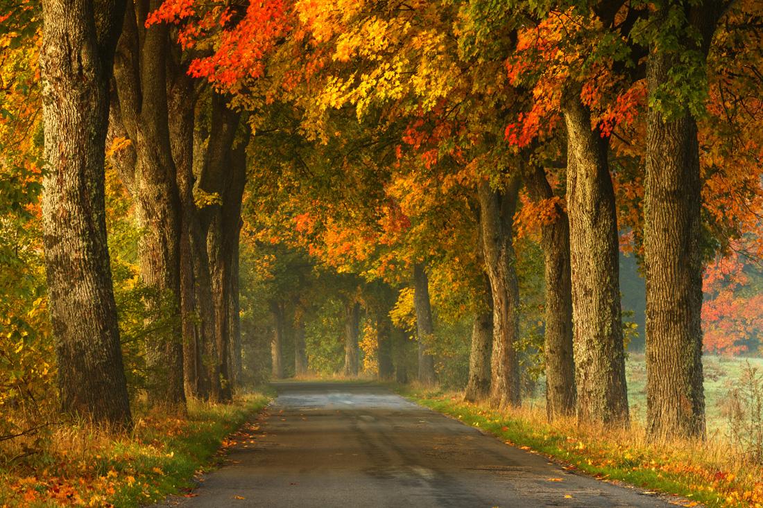 fotografowanie-jesieni-kurs-fotografii-007