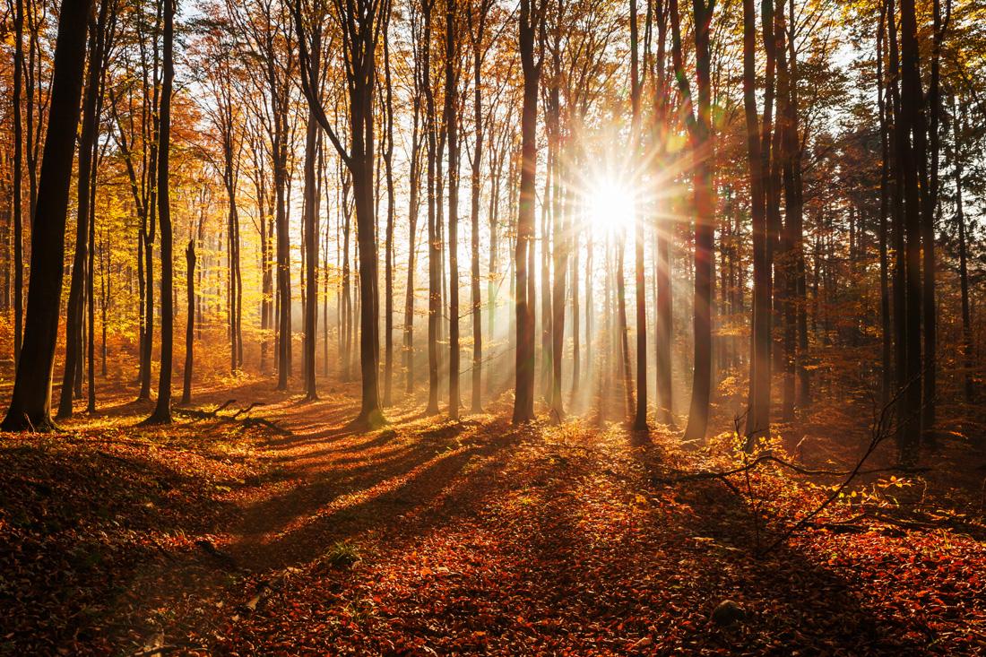 fotografowanie-jesieni-kurs-fotografii-008