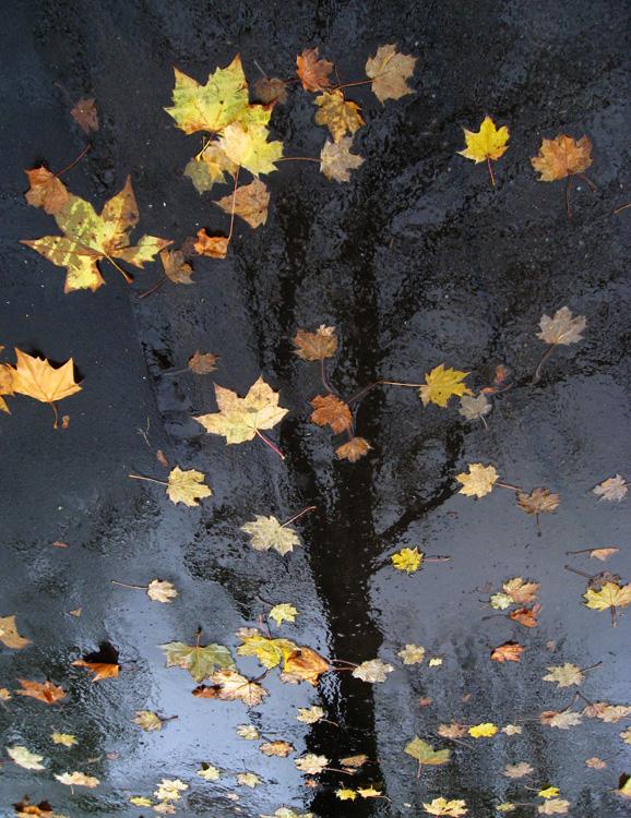 fotografowanie-jesieni-kurs-fotografii-015