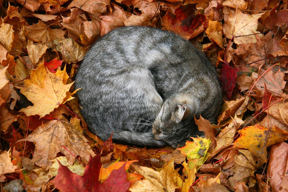 fotografowanie-jesieni-kurs-fotografii-016